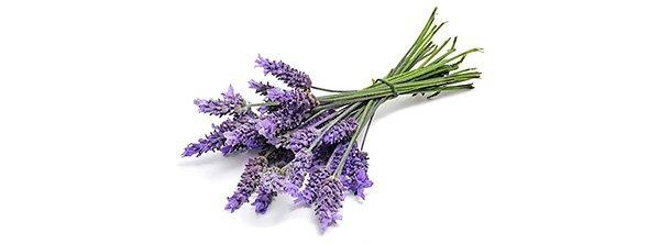 10 натуральных ароматов, которые не переносят комары